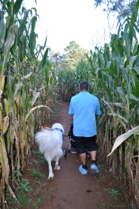 Another corn maze.