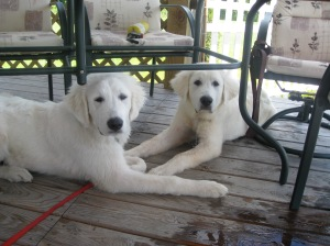 Denali on right with brother Tacoma on left.