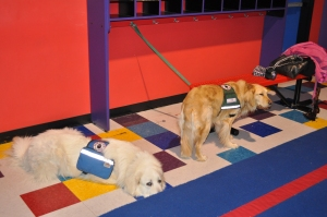 Another service dog friend who works for someone with TSC.